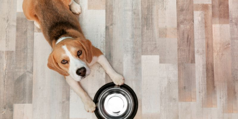 What Is The Best Flooring For Dogs, Laminate Flooring And Dogs