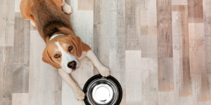 What Is The Best Flooring For Dogs Laminate Vinyl Or Special Wood